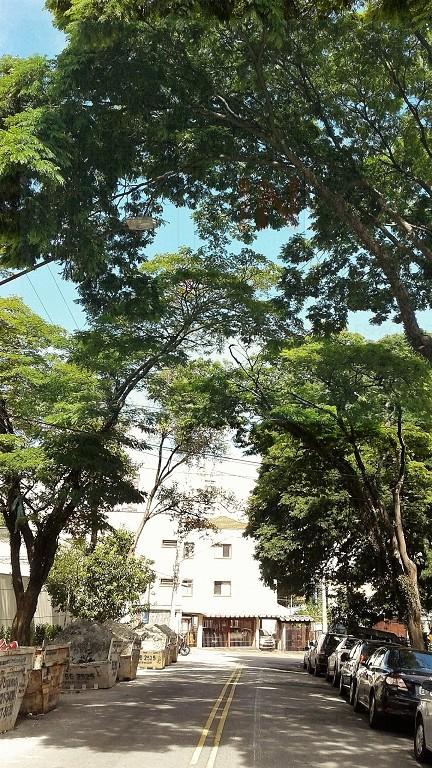 Rua Arborizada