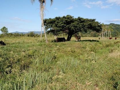 Ver mais detalhes de Rural com 0 Dormitórios  em Morro Alto - Maquiné/RS