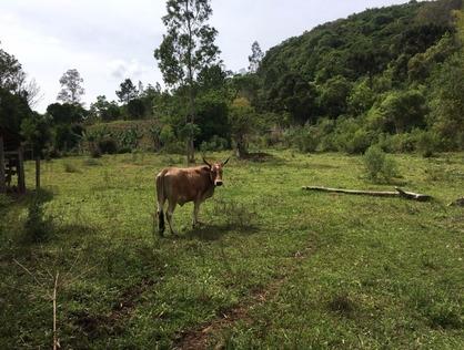 Ver mais detalhes de Rural com 0 Dormitórios  em Vilinha - Caraá/RS