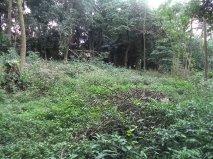 NovaVida Imóveis - Terreno, Chacara Flora (4547) - Foto 3