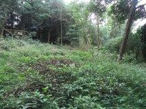 NovaVida Imóveis - Terreno, Chacara Flora (4547) - Foto 5
