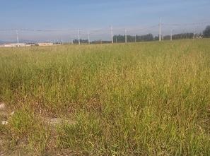 Ver mais detalhes de Terreno com 0 Dormitórios  em Bosque Eucalipto - Pindamonhangaba/SP