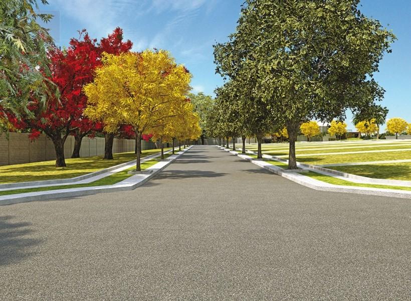 . Ruas e Avenidas com asfalto